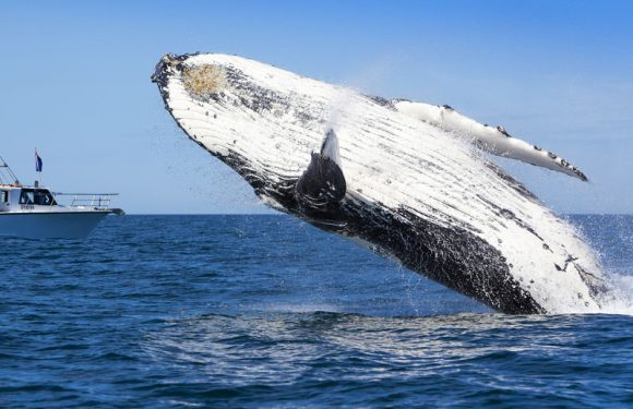 How to Plan a Perfect Whale Watching Trip